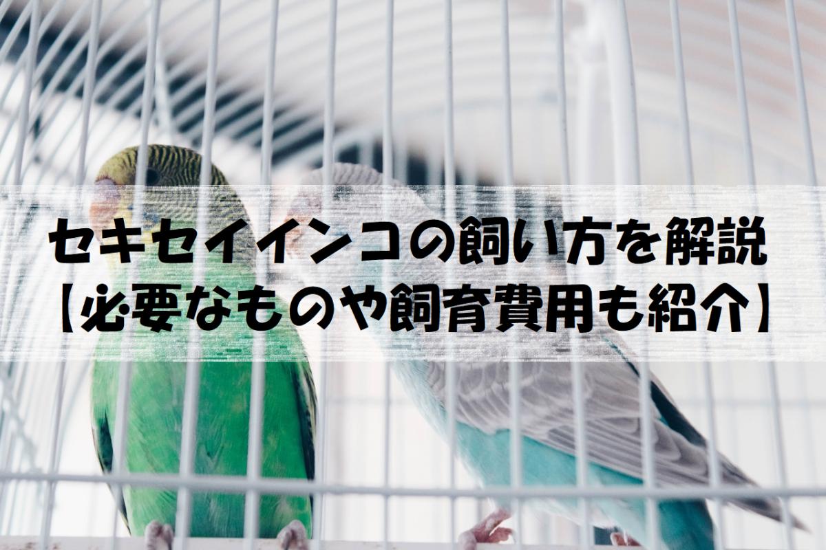 セキセイインコの飼い方を解説【必要なものや飼育費用も紹介】