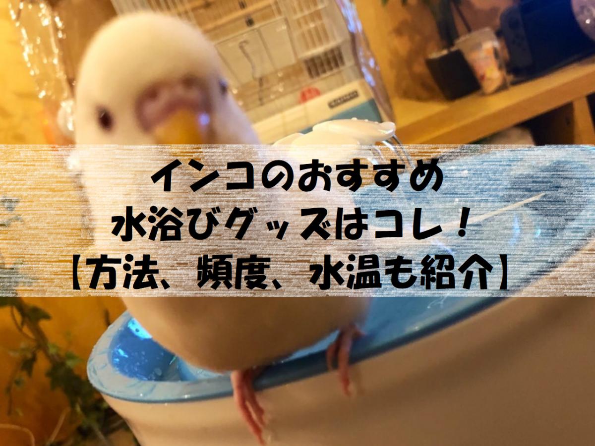 インコのおすすめ水浴びグッズ【正しい方法、頻度、水温も紹介】