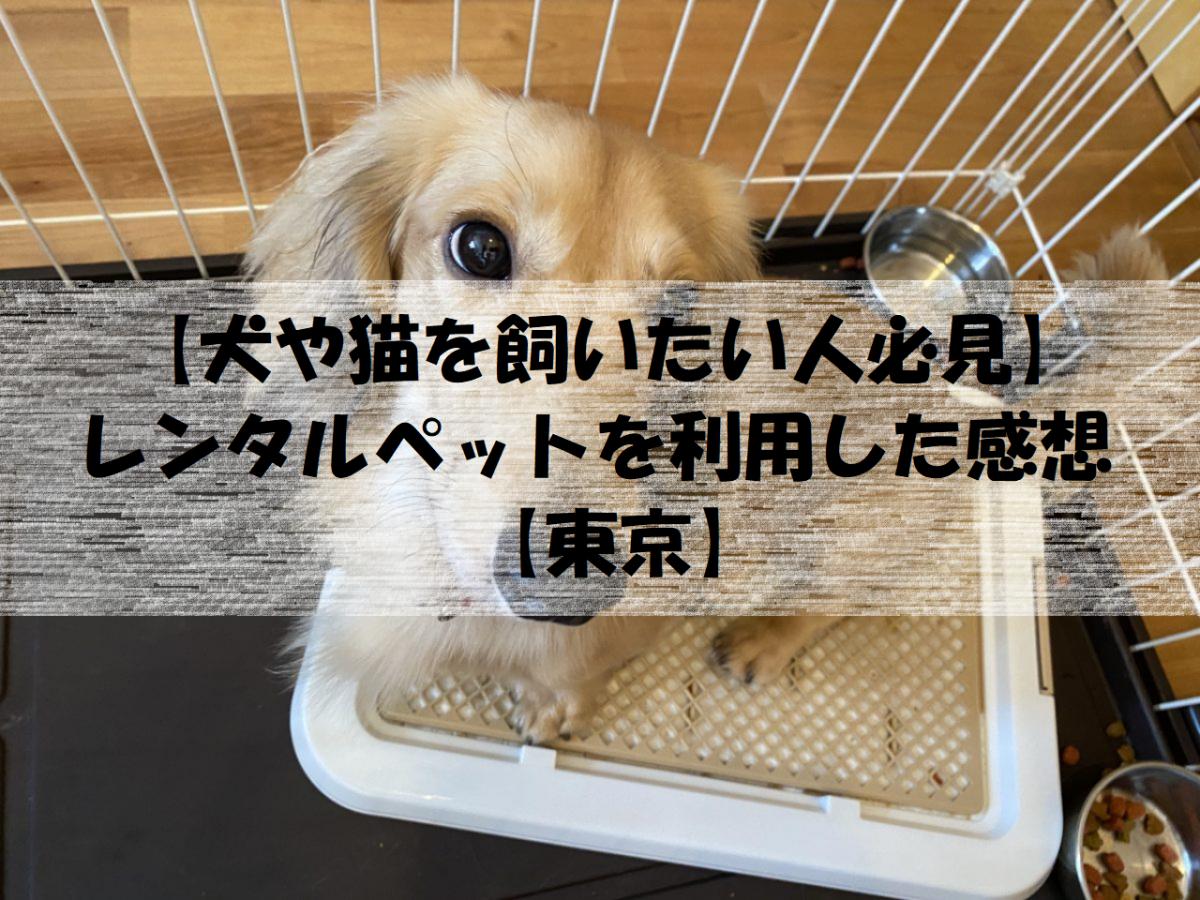 【犬や猫を飼いたい人必見】レンタルペットを利用した感想【東京】