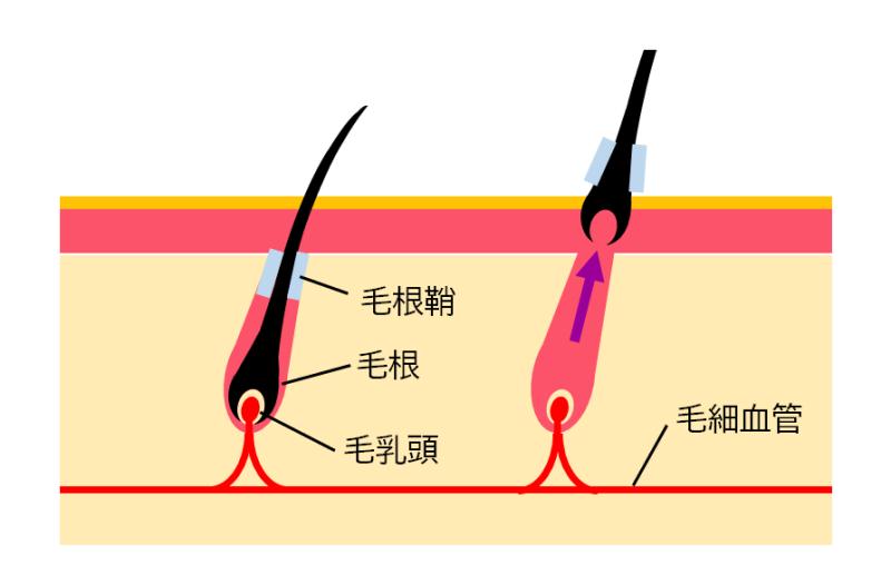 髭の解説図